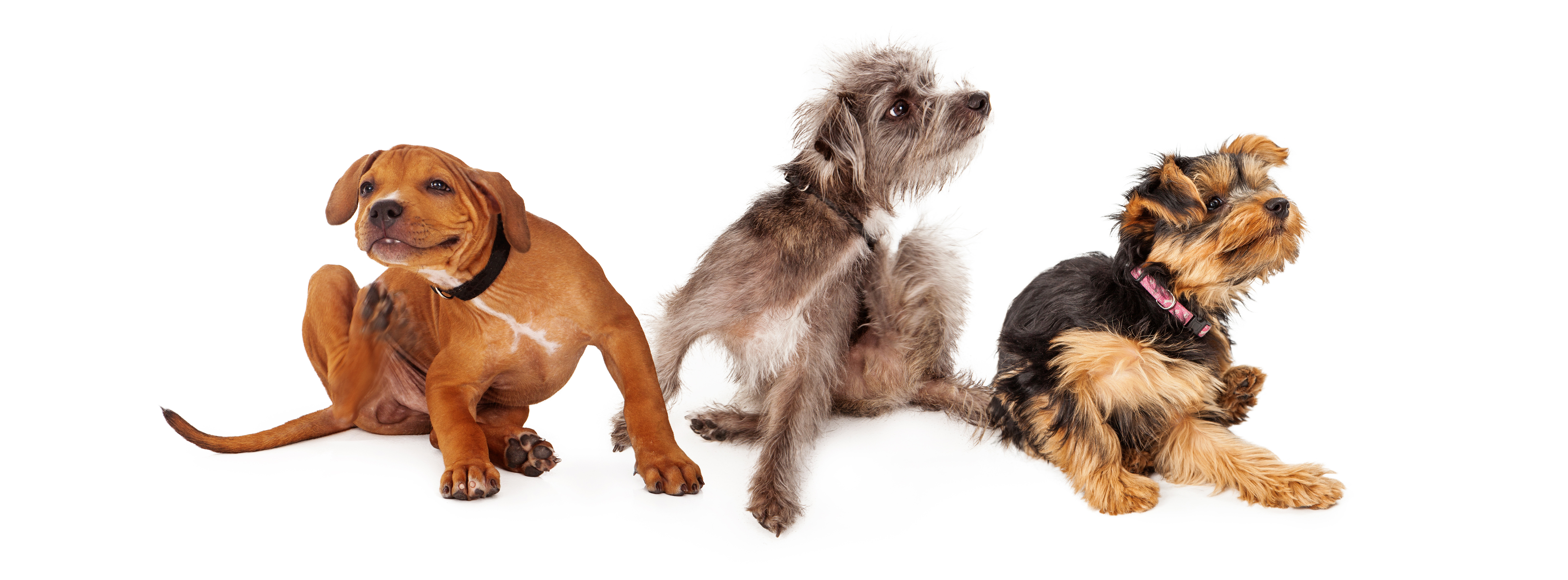 pet friendly dogs article image