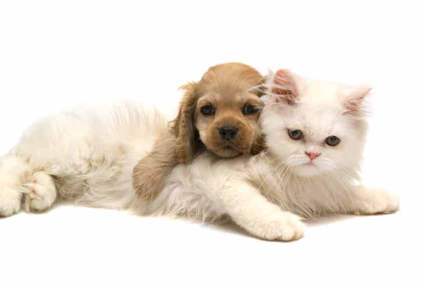 understanding your pets vaccines article image