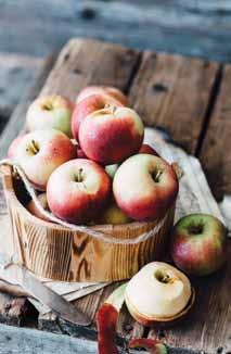 apple picking fun article image